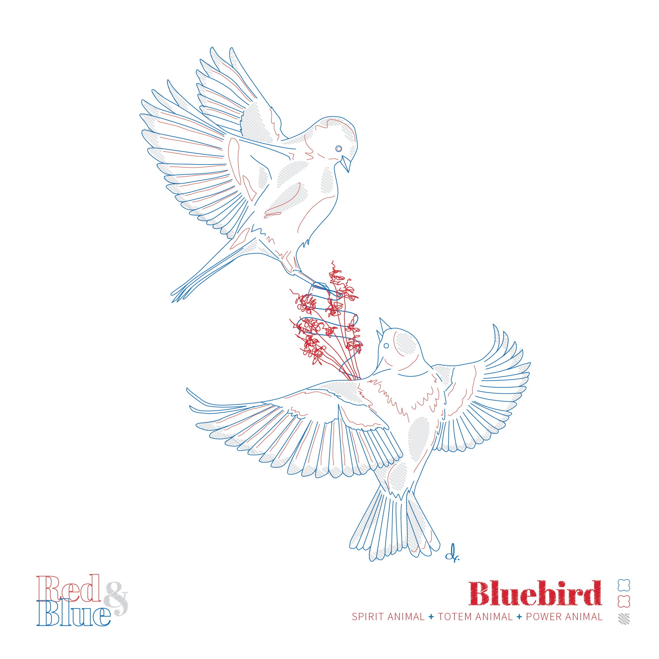 Bluebird Red and Blue Symbolism and Meaning