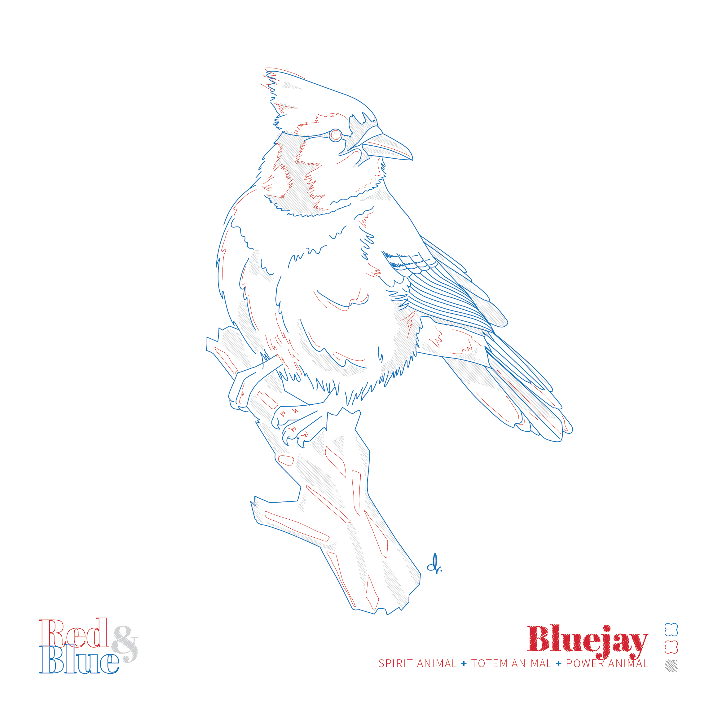 Bluejay Red and Blue Symbolism and Meaning