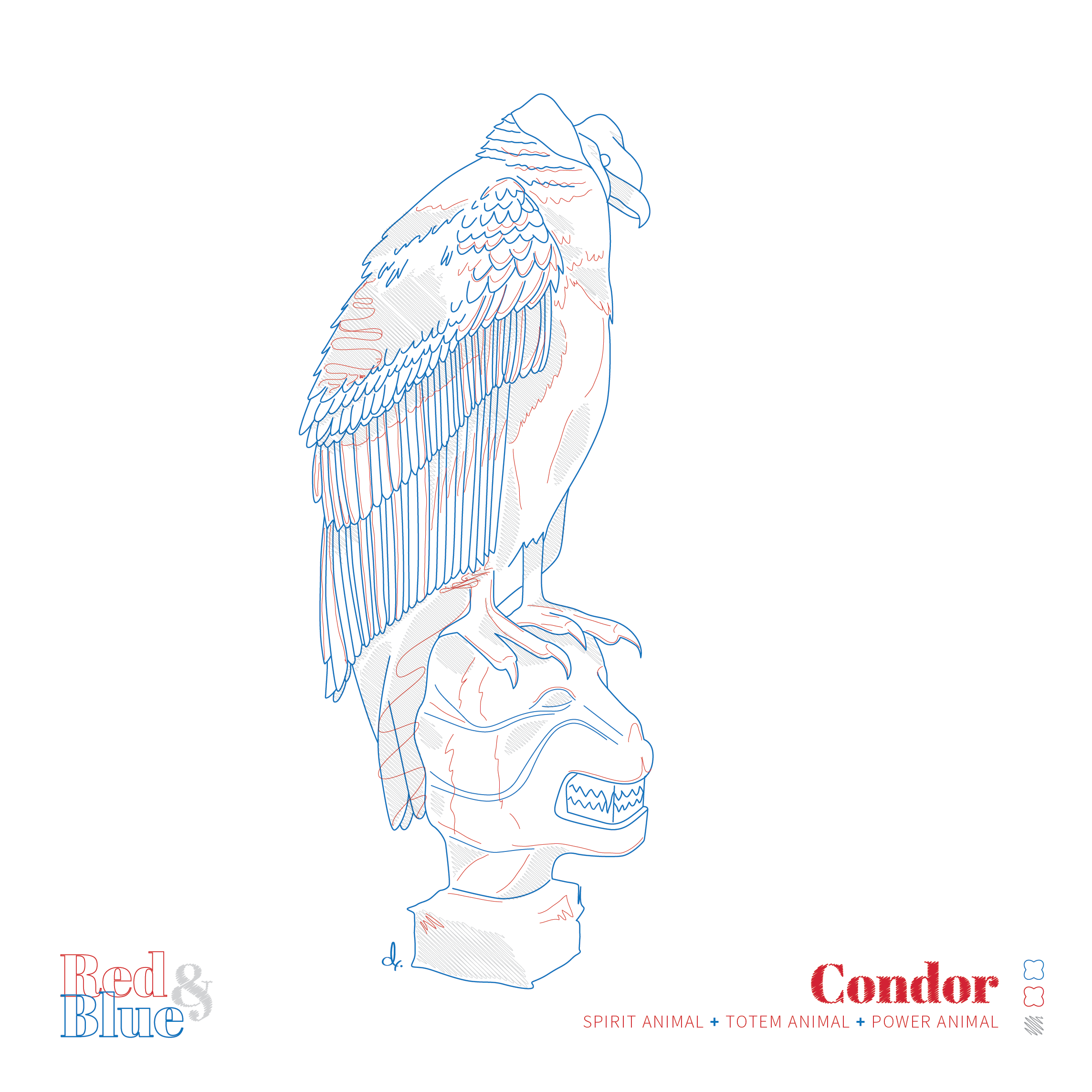 Condor Red and Blue Symbolism and Meaning