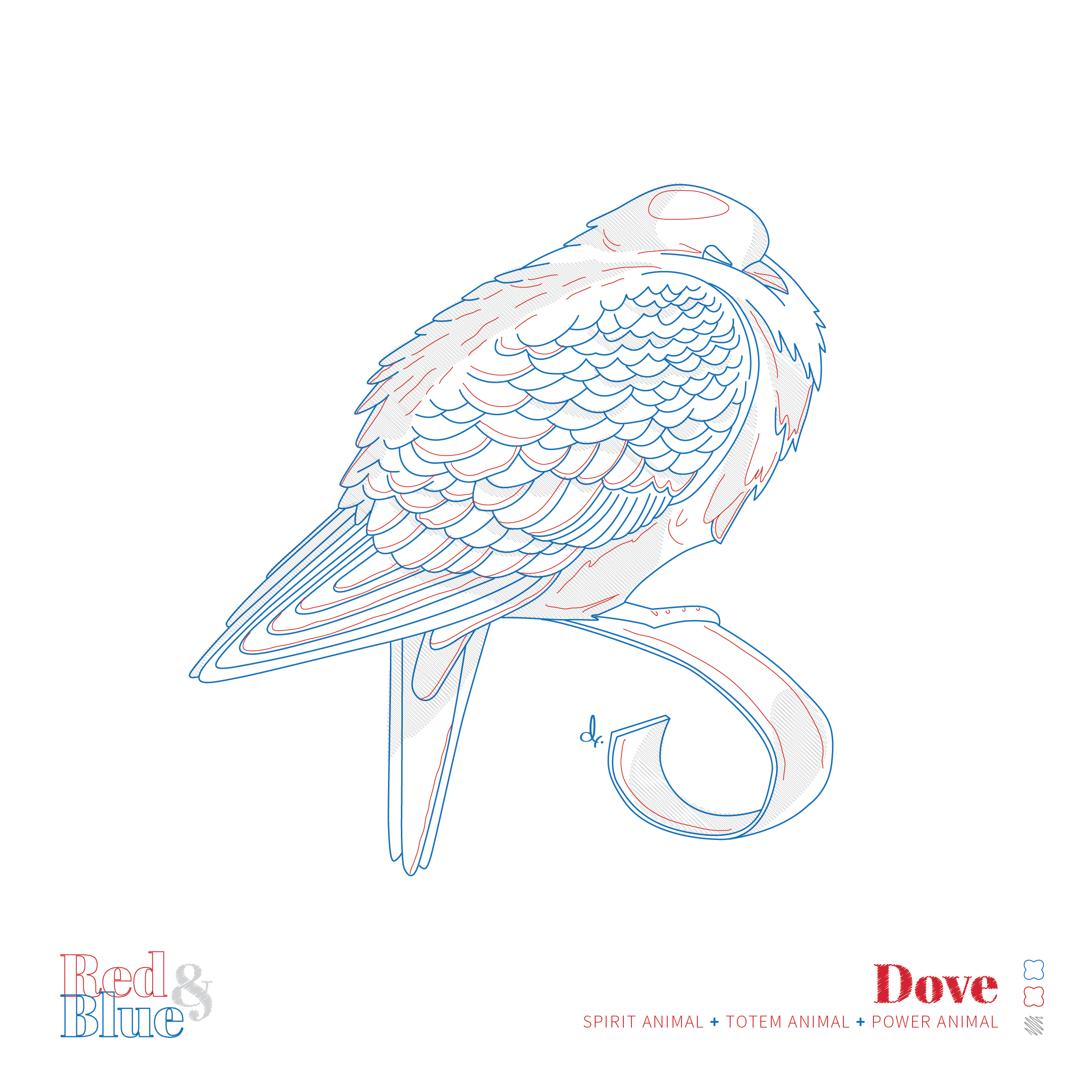 Dove Red and Blue Symbolism and Meaning